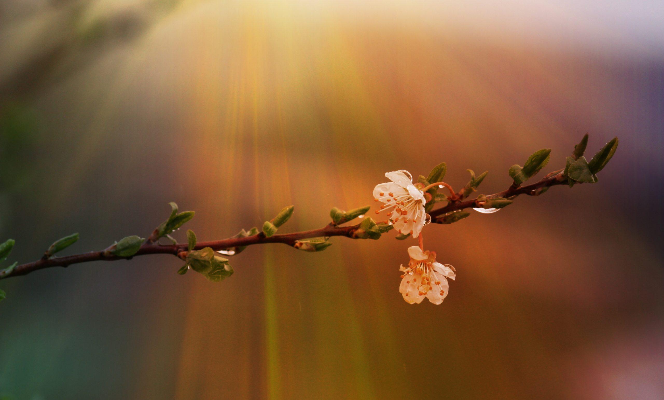 Santé printemps